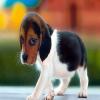 Bonitinho Puppie
