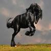 Cavalo Preto De Quebra-Cabeça