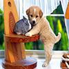 Coelho vs Cão