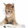 Bonito Gato Com Óculos De Quebra-Cabeça